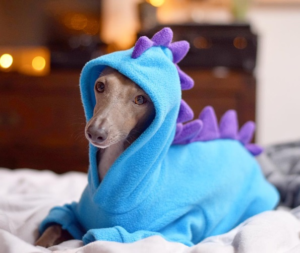 Dinosaur Fleece Onesies