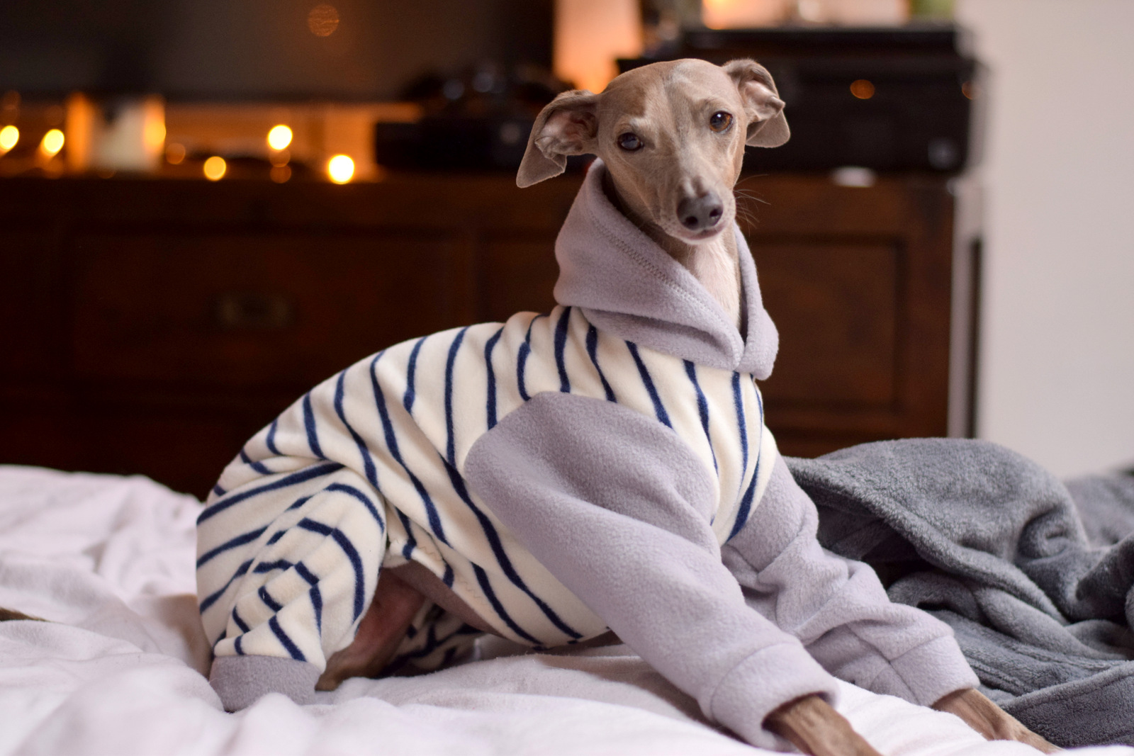Italian Greyhound Clothes – LOKO Pet Apparel