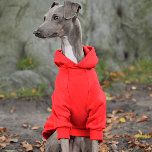 Hoodies For Italian Greyhounds