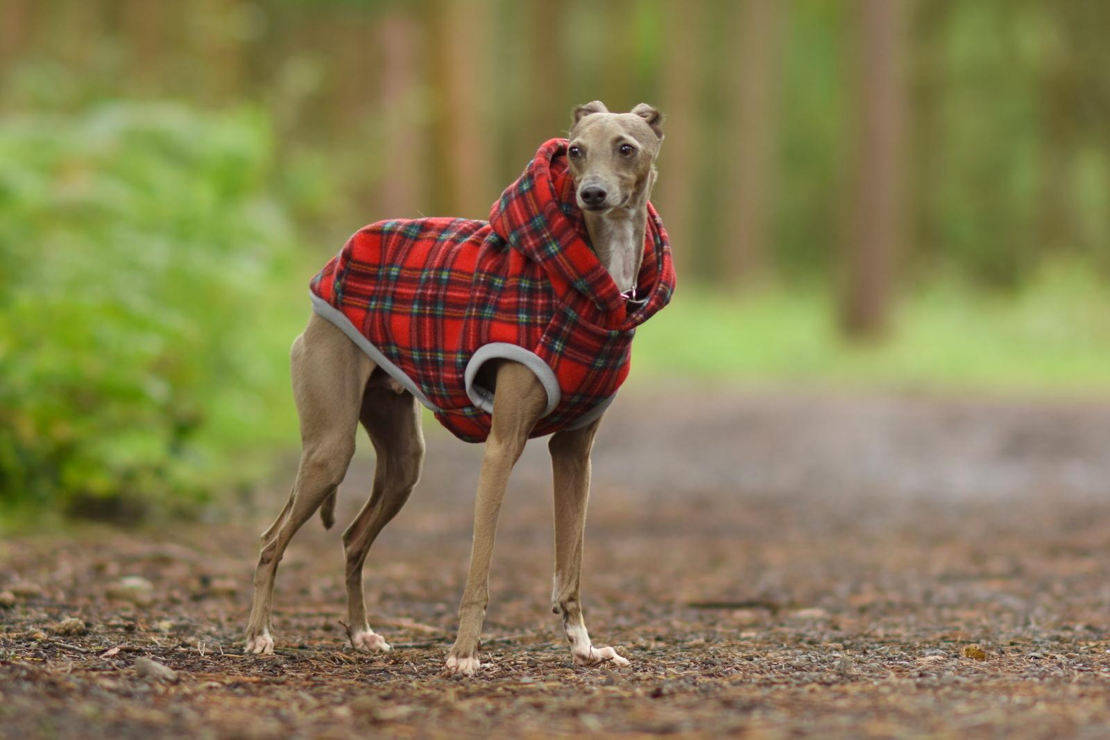 Italian Greyhound Range – Page 3 – LOKO Pet Apparel